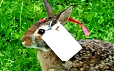 Investigan la presunta mutilación de conejos silvestres en Lincoln Squar...
