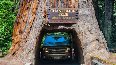 En fotos: un recorrido por los 'árboles túneles' de California