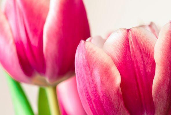 ¿Te gustan los tulipanes? ¡Perfecto! Pues será la ocasión ideal para col...