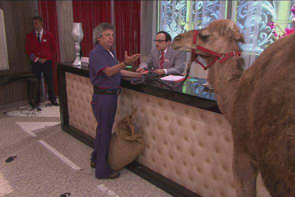 En la recepción, Don Chava le explicaba a Cipriano que los camellos eran...