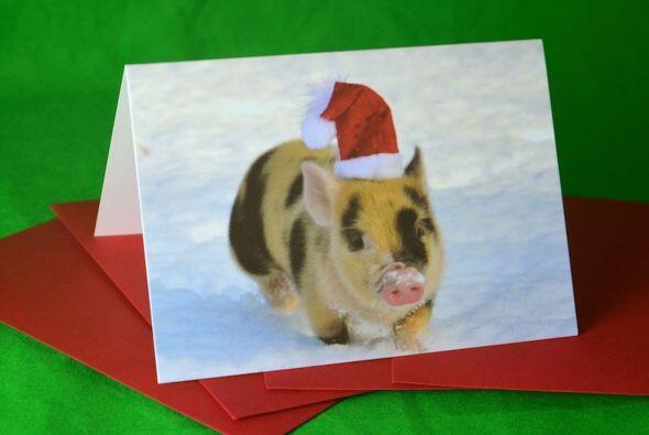Originales tarjetas navideñas con.. cerditos