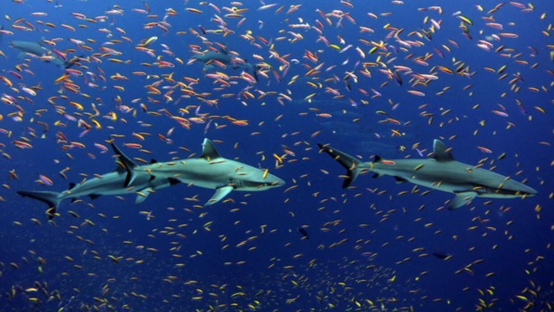 Nuevo estudio analizó datos de captura y previsiones de pesca desde 1950...