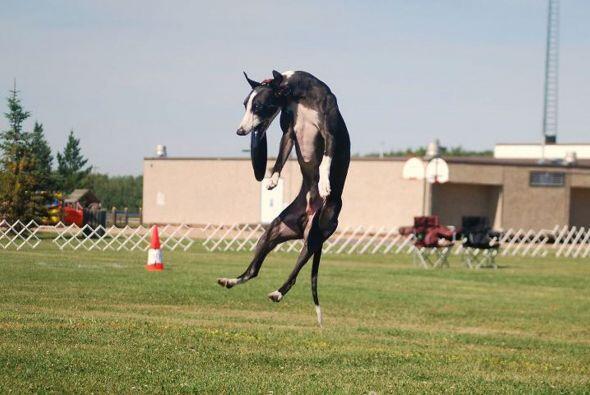 Davy desafía a la velocidad en cada atrapada de frisbee pues corre con t...