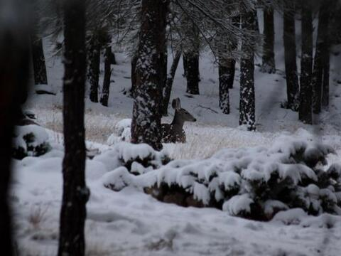 Nieve y muchas luces son la perfecta decoración para los á...