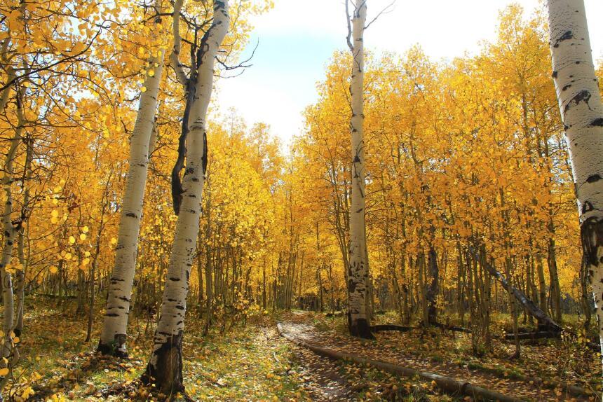 Cuando la mejor terapia es un paseo entre los árboles  solotravelgoals-2...