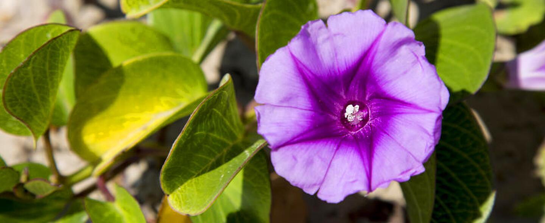 Junto con las Bluebonnets —flor oficial de Texas , en los bosques, autop...