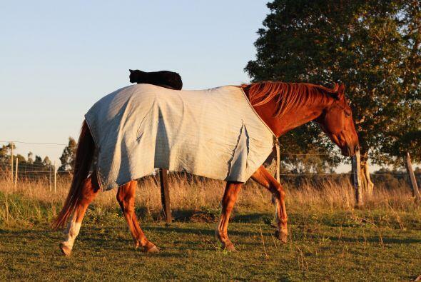 Pocos creerían que una amistad se podía dar entre un caballo y un gato....