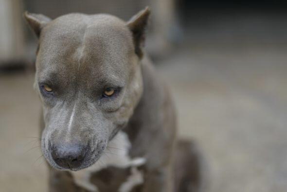 Por otro lado algunos estudios han demostrado que son perros  amigables...