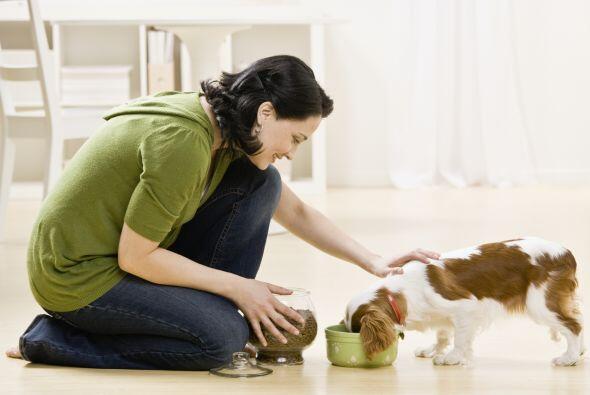 Si bien no puedes evitar que tu mascota pierda pelo, asegurarte de que s...