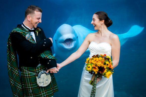 Qué tal este recuerdo de boda con una sonriente beluga detrás de los nov...
