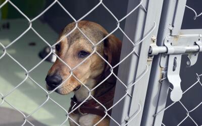 Varios animales domésticos, mientras son vendidos, los mantienen...