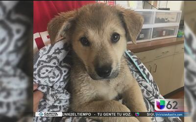 Autoridades de Manor rescatan a un perro abandonado al interior de un ve...
