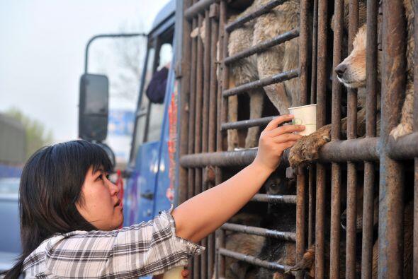 Los dueños de las mascotas en este país gastan un estimado de dos millon...
