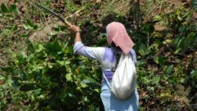Una mujer limpia la maleza de un camino en Tapachula, Chiapas.