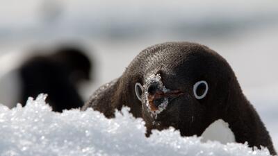 El continente más frío del planeta a través de 12 deslumbrantes fotografías
