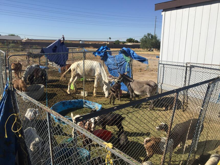 En fotos: Más de 100 animales incautados por las autoridades en Arizona...