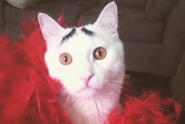 Un gatito con una peculiar seña, unos lunares que parecen ser una...