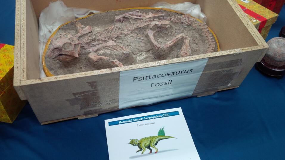 Fósiles y huevos de dinosarios decomisados