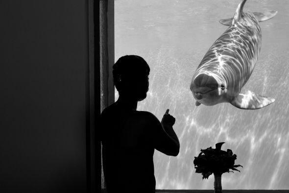 En la que los delfines siguieron sorprendiéndolos.