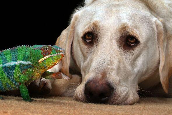 Nadie puede separar a estos amigos.