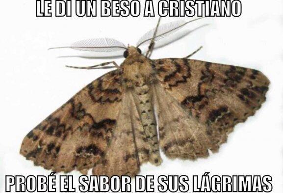 fotos memes cristiano lesión