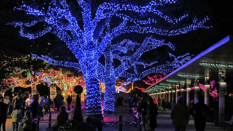 La magia de las luces de navidad en el zoológico de Houston