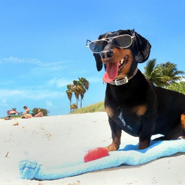 El verano está a la vuelta de la esquina y estos perros lo saben...