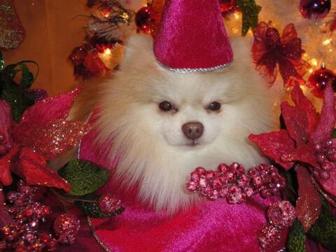 Bellas fotos navideñas enviadas por usuarios de  univisionhouston...