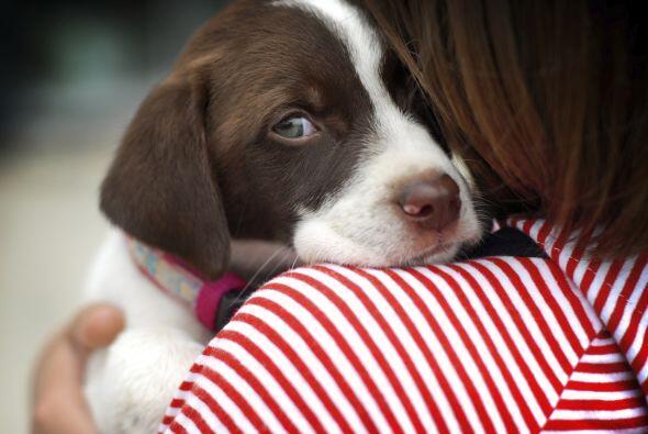 Durante las dos semanas que cuidé a Pulguitas, el perro de una amiga, co...