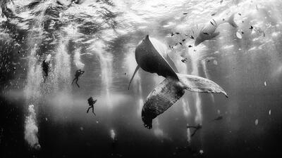 El mexicano que fotografía ballenas