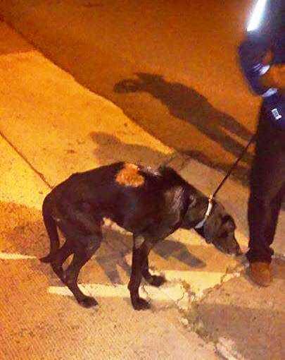 La Policía recibió una llamada notificando que habían tirado un perro de...