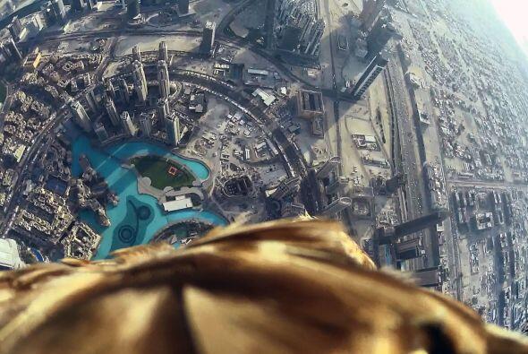 El águila se lanzó desde lo alto del rascacielos Burj Khalifa, en Dubái.