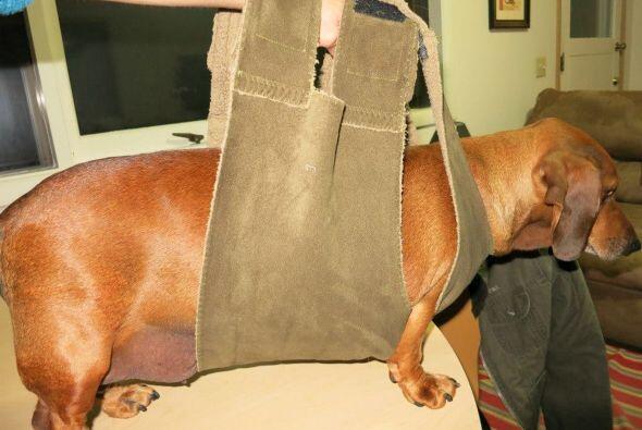 Obie era tan pesado que necesitaba de la ayuda de su dueña, y un arnés,...