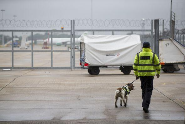 La policía de la frontera en Reino Unido, cuenta con perros detectores,...