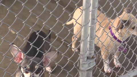 Ola de calor ha cobrado la vida de varias mascotas
