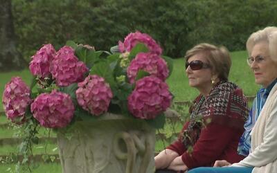 Una gran exhibición este fin de semana para los amantes de las flores y...