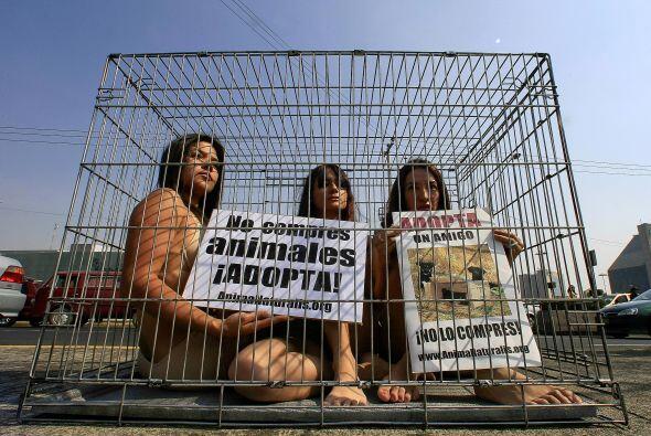 Diversas sociedades y activistasn han exigido que también se castigue al...