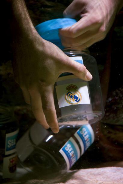 Cada uno de los contenedores tenía en su interior una sardina, además de...