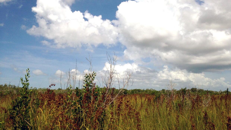 Un humedal de  juncias en el sur del Parque Nacional Everglades (Todas l...