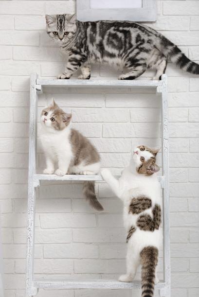 La principal causa de esta enfermedad, no son los gatos. Ya que también...