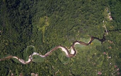 Los cambios en la distribución del bosque puede afectar tambi&eac...