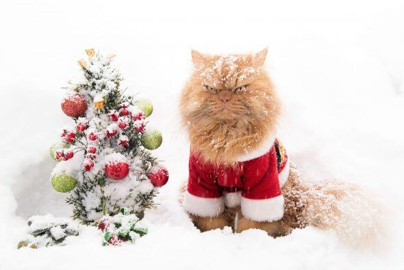Aunque no lo creas, al gato le gusta festejar, ¡no es un Grinch!