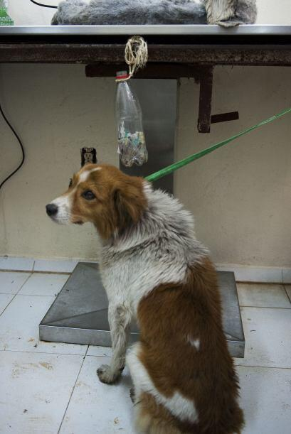 El destino de los perros abandonados es la calle, los lugares antirrábic...
