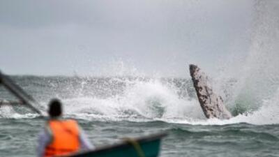 Los turistas regresaban al puerto cuando una ballena saltó del agua y ca...