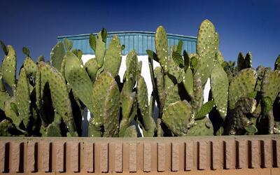 El autocultivo, nueva tendencia de consumo sustentable cactus.jpg
