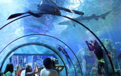 Moody Gardens ofrece múltiples actividades para disfrutar las vacaciones...