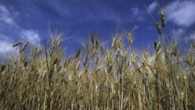 Tras su aparición en el Este de Europa, La Niña causó una severa sequía...