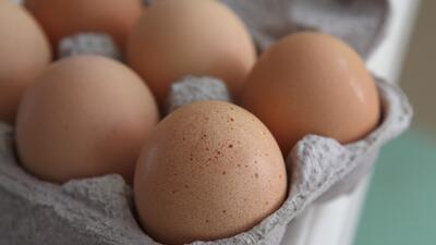 Una granja llena de ratas vivas y muertas: de allí salieron los huevos infectados con salmonela