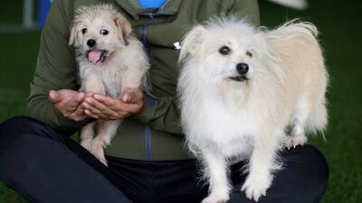 Un perro clonado es la sensación en las redes sociales