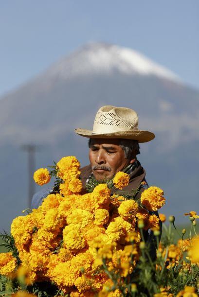 Esta flor se cultiva en el sureste mexicano, sin embargo hay lugares muy...